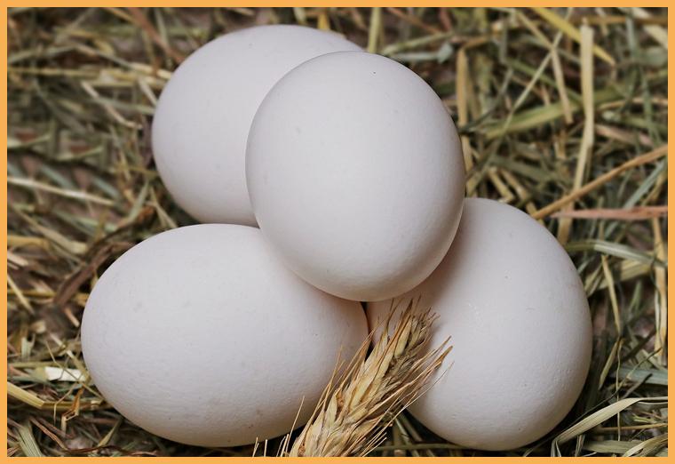 Польза и вред яиц для здоровья
