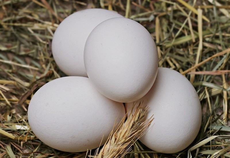 Белые куриные яйца